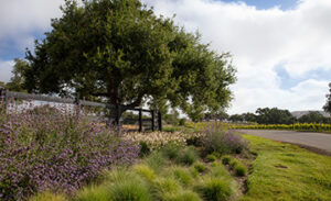 paysage_water_conservation_landscaping